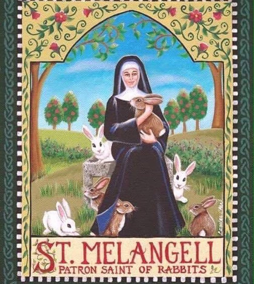 Did you know that the patron saint of rabbits and hares is St Melangell?  The story of St Melangell might resemble a fairy tale, but is in fact true. • In the early 7th Century, Melangell, the daughter of an Irish king, fled to a beautiful spot at the head of the Tanat Valley in Wales, where she lived a peaceful solitary life until the Prince of Powys went hunting, and a frightened hare took refuge under Melangell's cloak. The Prince's dogs were subdued and, deeply impressed, he gave her the valley to create a sanctuary. Ever since, Pennant Melangell has been a place of pilgrimage, and Melangell remains the patron saint of hares, rabbits, small animals, and the natural environment.