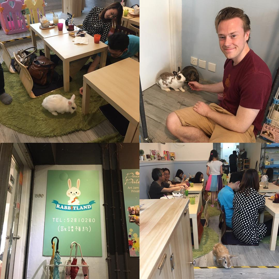 """Places like Hong Kong and Tokyo are very densely populated. Because of this people often live in small apartments and hence they find it hard to keep pets at home.  That's why different pet cafes have opened in these cities. They are cafes where you get to meet, pet and feed your favorite pet animals. I read about the these cafes online and I was of course happy to see that there were so called """"rabbit cafes"""" or """"usagi cafes"""" in both Tokyo and Hong Kong.  Last Saturday I made a reservation at the rabbit cafe in Hong Kong called """"RabbitLand"""". Here I got to meet resident rabbits like Momo and Mimi. They really knew how to entertain the guests.  It was a great experience. Thanks @rabbitlandcafe 🐇"""